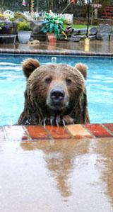 brutus in pool