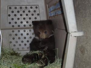 cub in crate